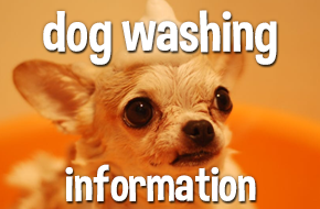 dog washing information, scoobys doggy day care northampton